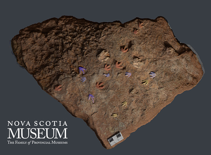3D digital model captures the details of the 'dinosaur' footprints that cover a surface of a sandstone boulder that is 200 million years old.