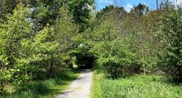 Trail at Uniacke Estate Museum Park