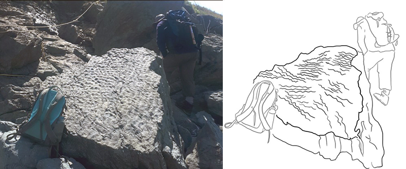 Rock slab with ancient ripple marks and interpretive drawing