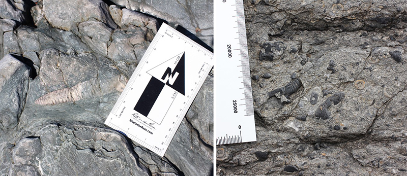 Orthoceras and other fossils from Arisaig