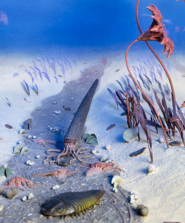 Silurian diorama showing crinoid, trilobite and brachiopods on the sea floor.