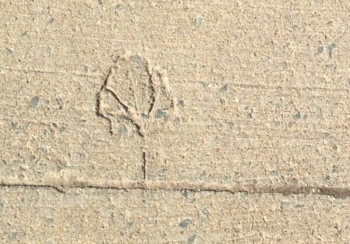 Leaf impression in cement sidewalk