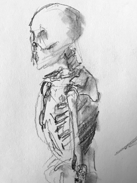 sketch of skeleton